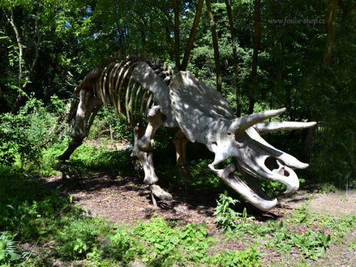 Rekonstrukce kostry triceratopse fotografována v dinoparku Vyškov.