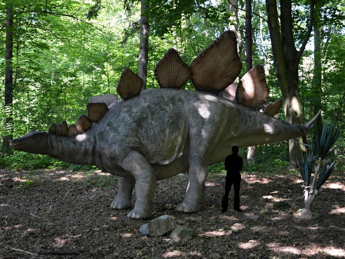Boční pohled na stegosaura, dinosaura z období jury.