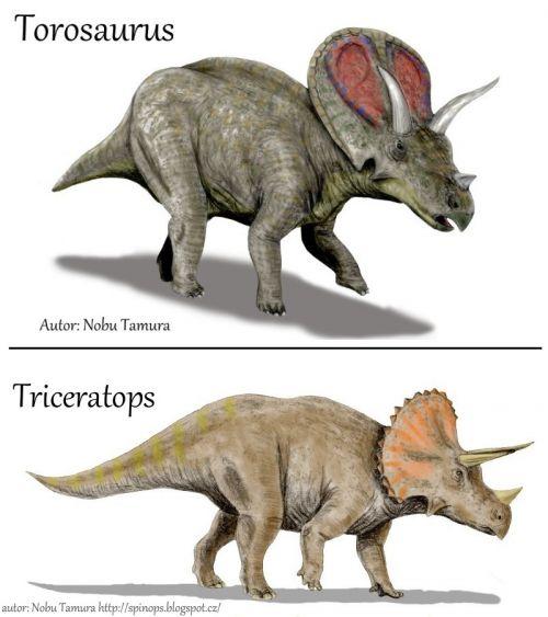 Porovnání vzhledu dinosaurů torosaurus a triceratops