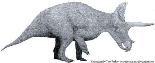 Triceratops na kresbě paleoumělce Toma Parkera z deviantart.com