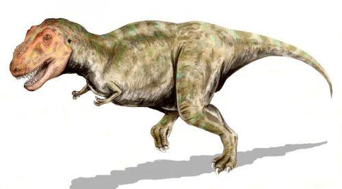 Dospělý jedinec druhu tyrannosaurus rex