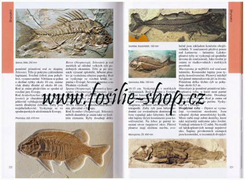 Dávný svět zkamenělin - Martin Košťák - ukázka z knihy