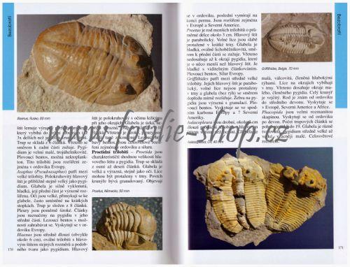 Ukázka z knihy Dávný svět zkamenělin - Martin Košťák