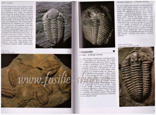 Encyklopedie zkamenělin - Ivanov, Gregorová, Hrdličková - ukázka z knihy