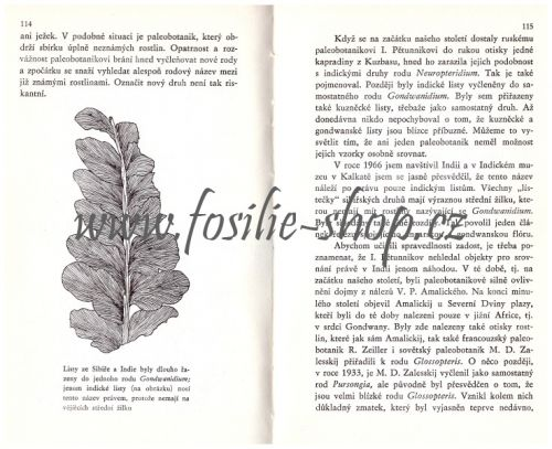 Kamenný herbář - S. V. Mejen - ukázka 1