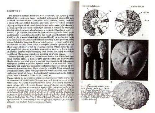 Kapesní atlas zkamenělin - Habětín, Knobloch - ukázka z knihy