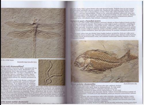 Ukázky fosílií - vážka a zakmenělá ryba z knihy Otisky času.