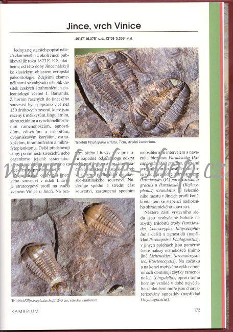 Jince, vrch Vinice - trilobiti