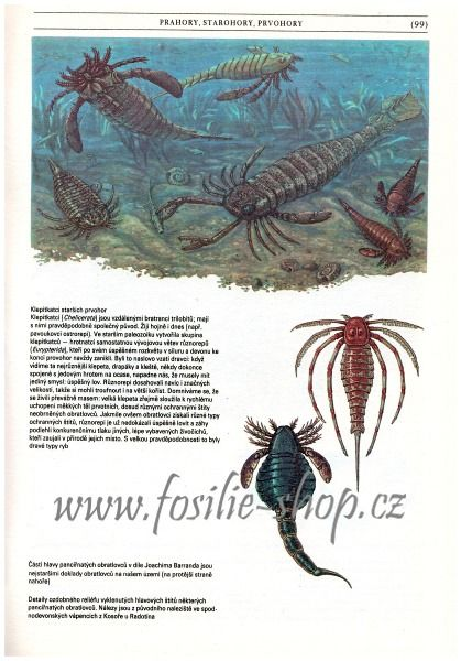 Kniha Zkamenělá minulost - Oldřich Fejfar - ukázka 2