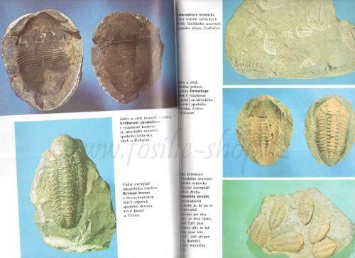 Ukázka z knihy: Zkamenělý svět - Rudolf Prokop