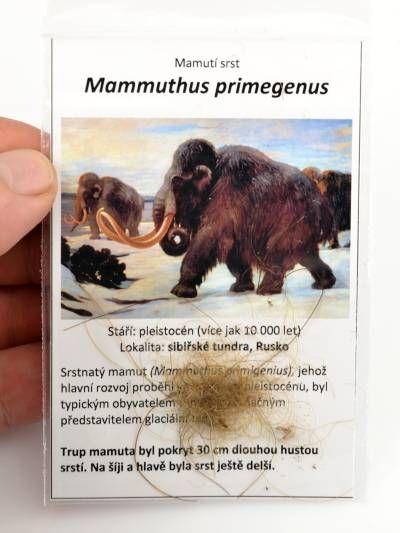 Mamutí srst