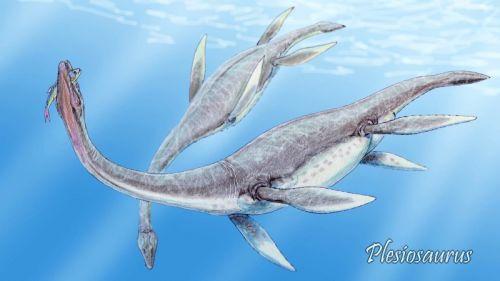 Plesiosaurus mauritanicus
