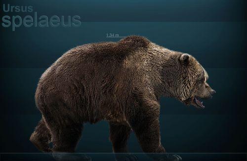 Ursus spelaeus - Medvěd jeskynní