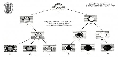 Diagram znázorňující různý způsob fosilizace schránky mlže, vznik jádra a skulpturního jádra.